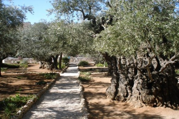 Grădina-Ghetsimani