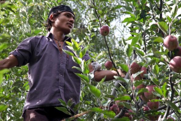 la furat mere