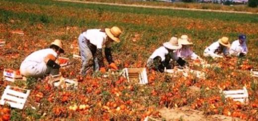 pomodori-puglia