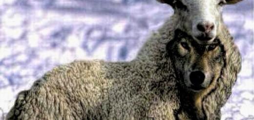 lup-în-piele-de-oaie-680x431