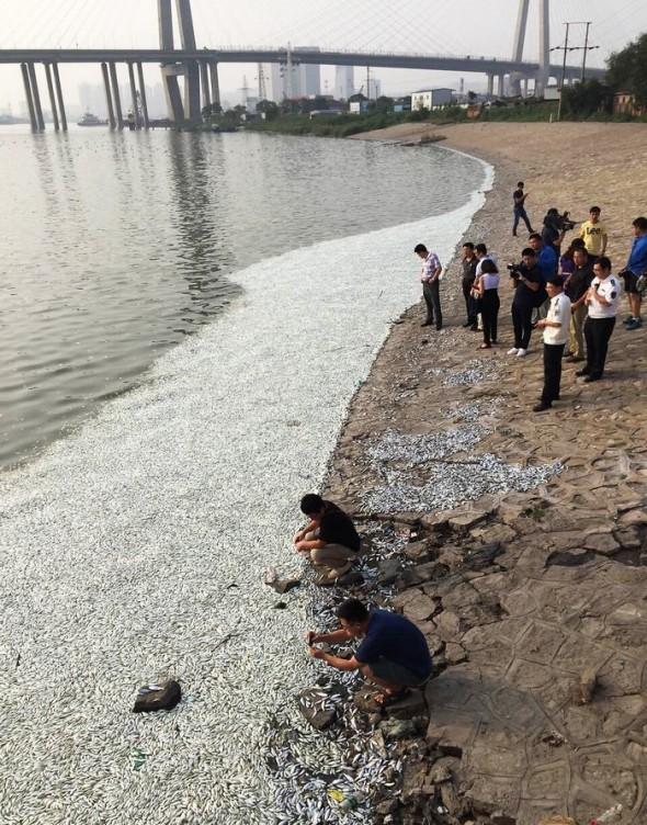 Efectele-cianurii-in-urma-exploziei-de-la-Tianjin-foto-2