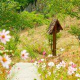 cruce-campie-flori