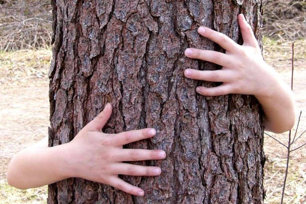 imbratisare-copac