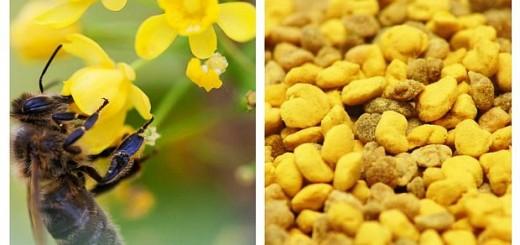 polen-depresie-oboseala