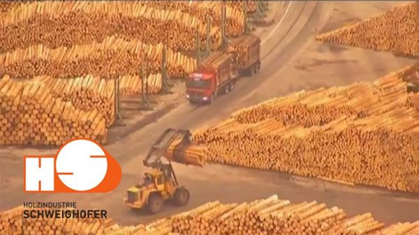 Lemn-tăiat-ilegal-Holzindustrie-Schweighofer
