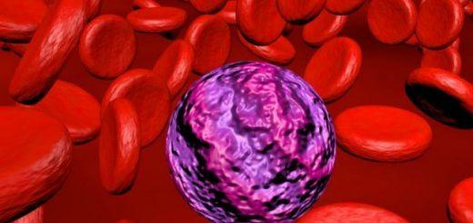 Soia modificată genetic creşte nivelul de estrogen din organism.